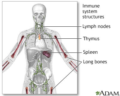 Immune system structures