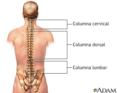 Anatomía posterior de la columna vertebral - Loyola University ...